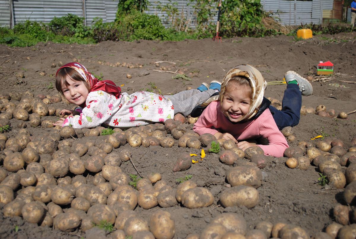 діти на картоплі